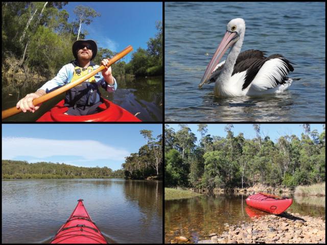 Kayaker, kayaks, and pelican on the Bermagui River in Bermagui