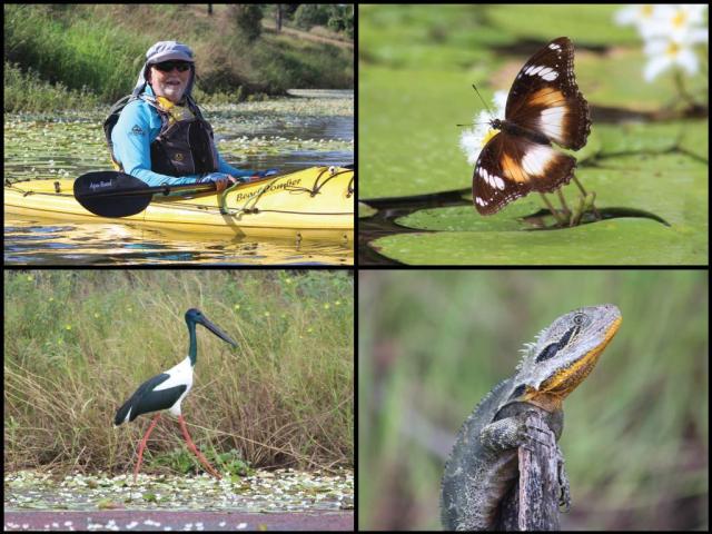 Kayaker, butterfly, jabiru, and eastern water dragon on the Kolan River at Bucca Weir