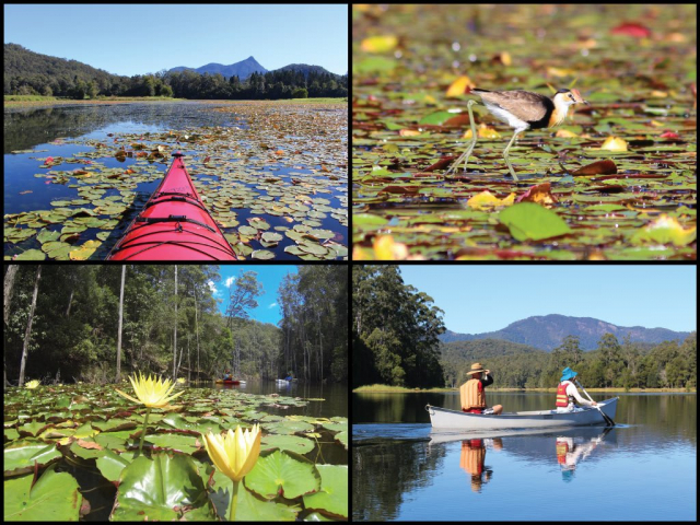 Kayak, canoeists, comb-crested jacana, lilies, and Wolambiny Momily at Clarrie Hall Dam