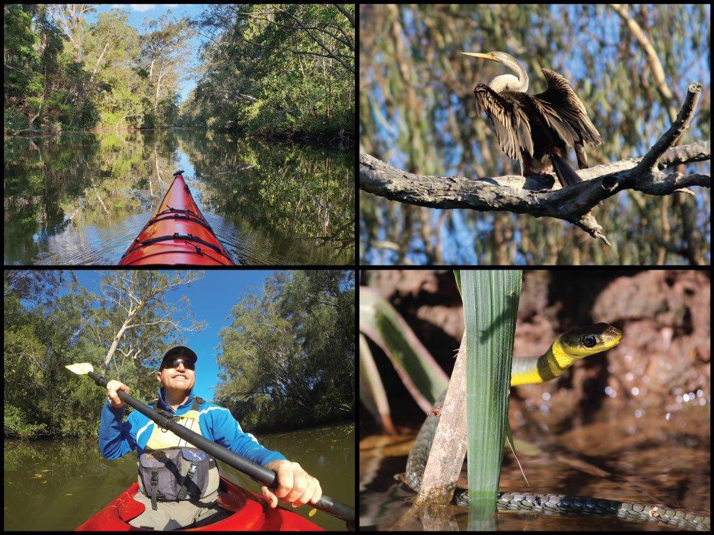 Kayaker, kayak, Australasian darter, and tree snake at Coochin Creek