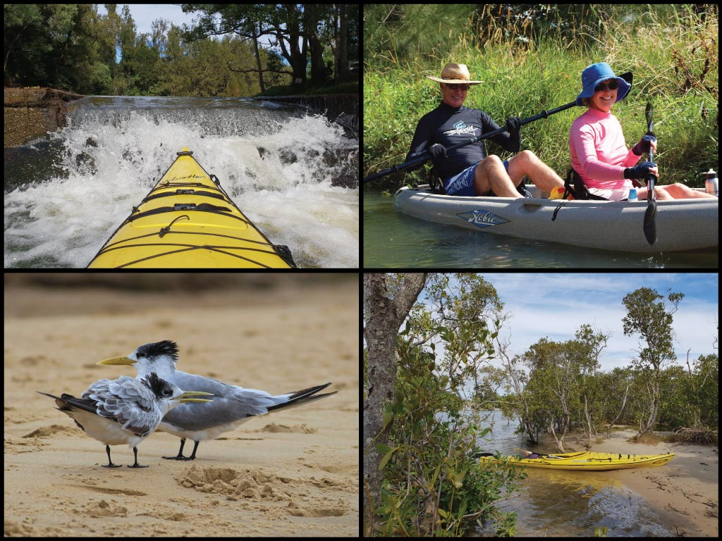 Happy kayakers, kayaks, crested terns, and cascading water at Currumbin Creek