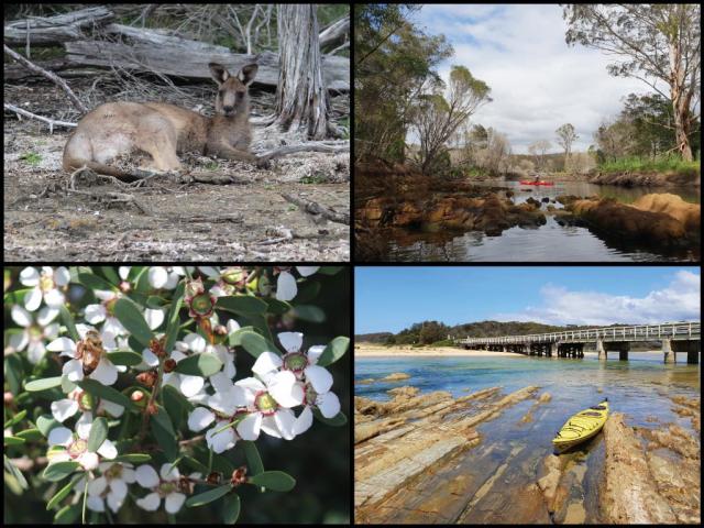 Kayaks, rock formations, coastal tea-tree, and bridge at Cuttagee Lake