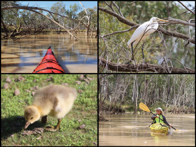 Kayaks, egret and gosling at Dogwood Creek in Miles