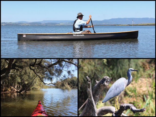 Canoeist, kayak, and white-faced heron on Mullet Creek and Koong Burry Bay at Lake Illawarra