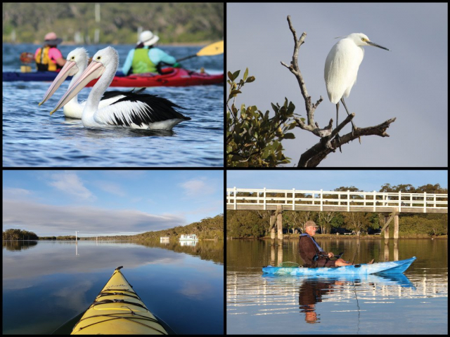 Kayakers, fishing, pelicans, and egret at Macleay Arm in Stuarts Point