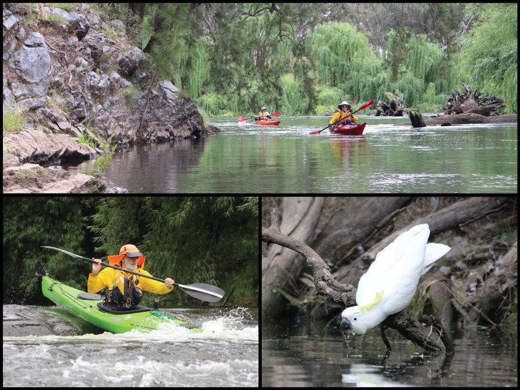 Kayakers and sulphur-crested cockatoo on the Macquarie River at Mumbil