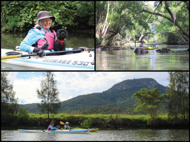 Kayakers and kayaker with dog on the Maroochy River and North Maroochy River