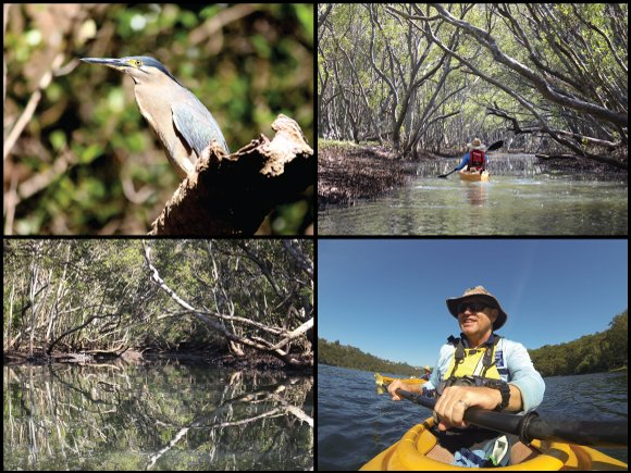 Kayakers, striated heron, and reflections at Scotts Creek in Castle Cove