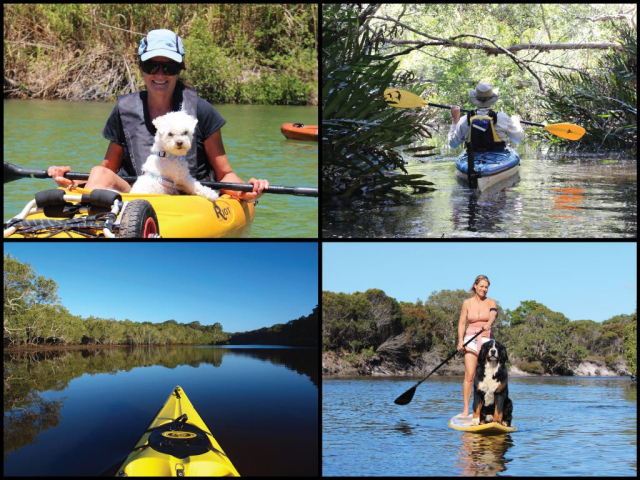 Stand up paddler with dog, kayaker with dog, and kayaks at Simpsons Creek in Brunswick Heads