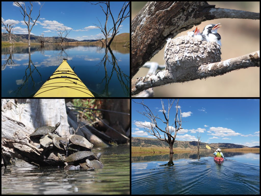 Kayaks, magpie lark nest, and turtles at Lake St Clair