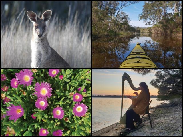 Kayak, kangaroo, pigface flowers, and music by Lissa-Käthe at Wallagoot Lake in Bournda National Park
