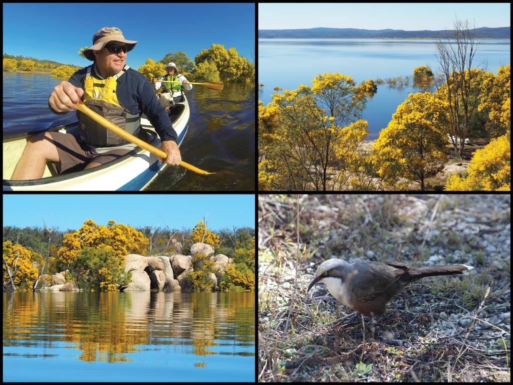 Canoe, granite boulders, wattles, and grey crowned babbler at Lake Copeton