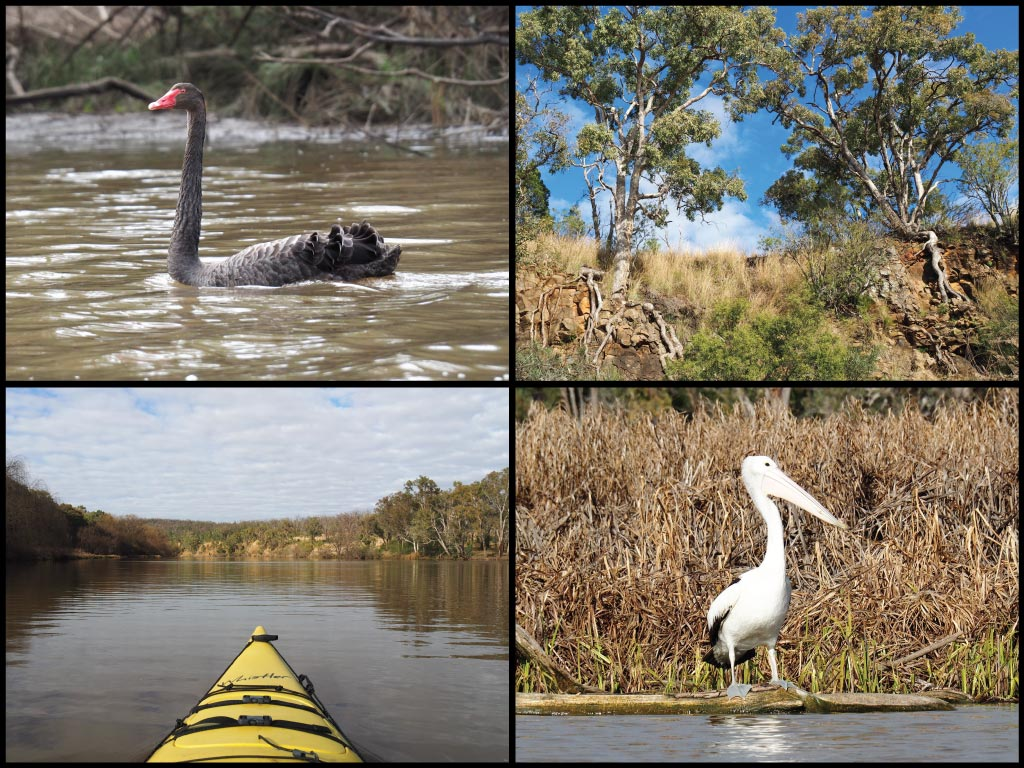Kayak, black swan, pelican, and rock formations at Lake Inverell in Inverell
